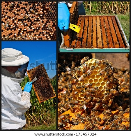 Collage of honeybee images - stock photo