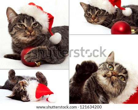 Collage of images with Christmas Cat and snowflakes - stock photo