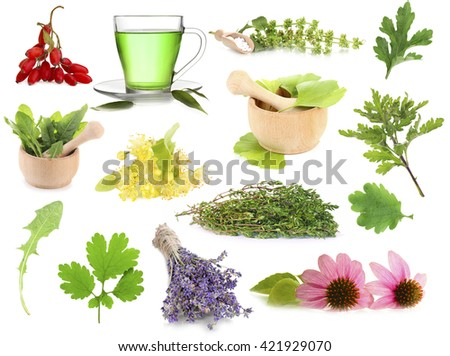 Collage of medicinal herbs isolated on white - stock photo