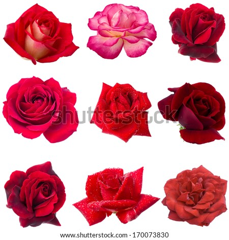 collage of nine red roses