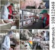 Collage of photographs showing intensive pig farming. Veterinarian at work. Animal husbandry. Farmer at work. - stock