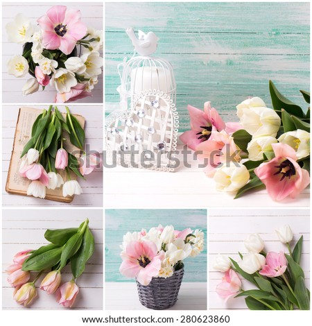 Collage of photos with fresh  spring white and pink  tulips and narcissus in bucket on white painted wooden background against turquoise wall. Selective focus.