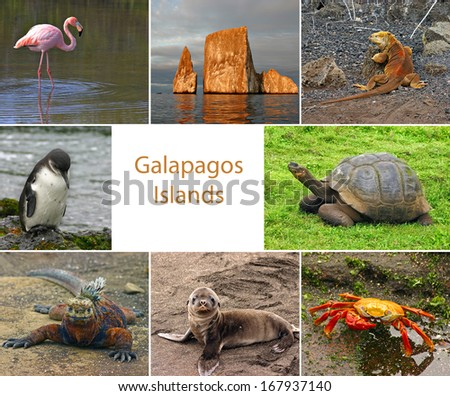 Collage of pictures from the Galapagos Islands with room for text - stock photo