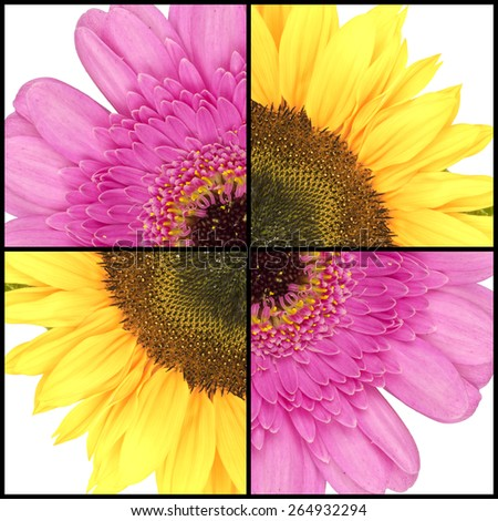 Collage of pink Gerbera and yellow Sunflower in a square frame - stock photo