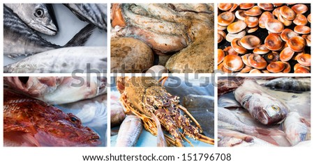 Collage of raw seafood. Close-up of lobster, octopus, redfish, mackerel and mussel