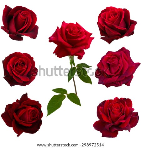 collage of seven red roses isolated on white background - stock photo