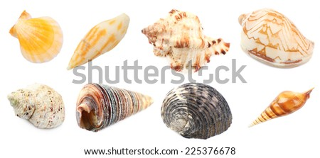 Collage of shells and other beach flotsam isolated on white - stock photo