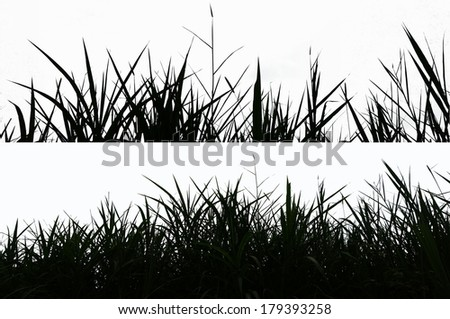 Collage of silhouette grass isolated on white - stock photo