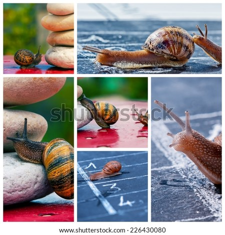 collage of snail business managment metaphor - stock photo