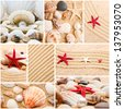 Collage of summer seashells. collection of seashells. pearl on the seashell . The exotic sea shell . Treasure from the sea. - stock photo