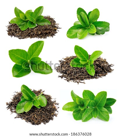Collage of tea leaves on a white background  - stock photo