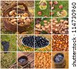 collage of the italian autumnal fruits: mushrooms, grapes, chestnuts, almonds, olives - typical products of the autumn in Tuscany, Italy - stock photo