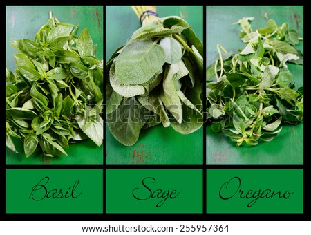 Collage of three fresh kitchen and food preparation herbs, basil, sage and oregano with sample text. - stock photo