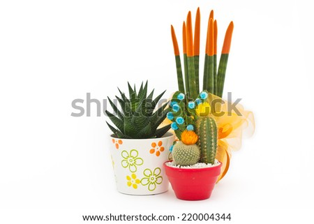 collage of various cactus in front of white background - stock photo