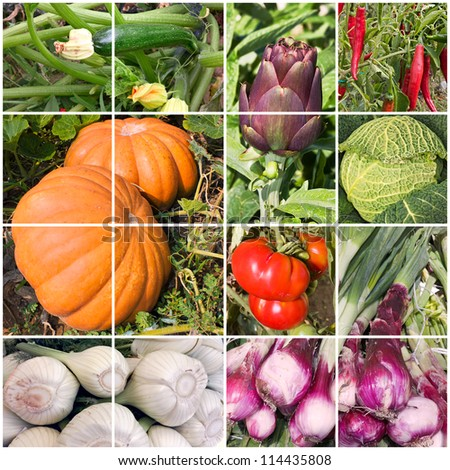 collage of vegetables - products of vegetable garden - stock photo