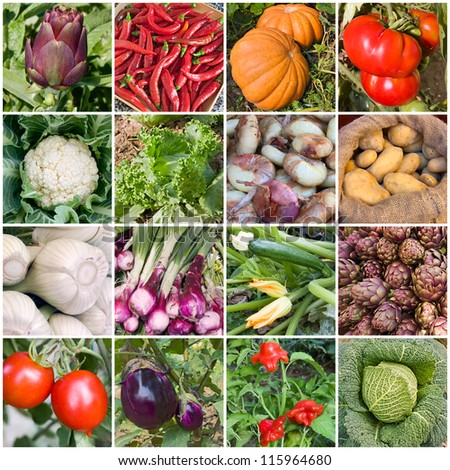 collage of vegetables - products of vegetable garden