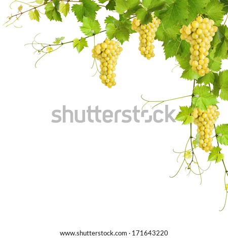 Collage of vine leaves and yellow grapes on white background - stock photo