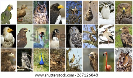 Collage of wild birds in the wild - stock photo