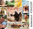Collage photo of some wild animals in the zoo. at Nakhon Ratchasima city in thailand - stock photo