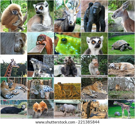 Collage photos of some wild animals - stock photo