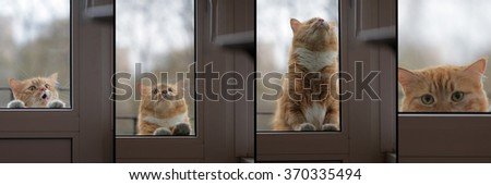 collage portrait cat wants to come house, sad eyes look - stock photo