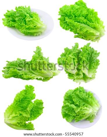 Collage (set) of fresh Leaf of lettuce . Isolated - stock photo