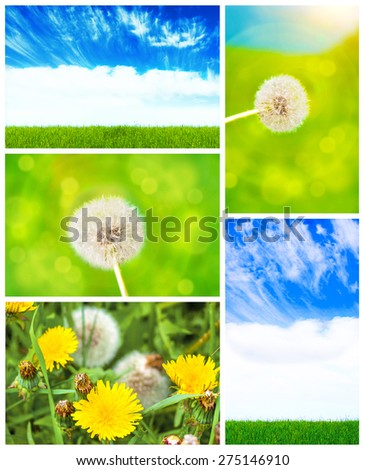 Collage: sky, grass, dandelion in the field - stock photo