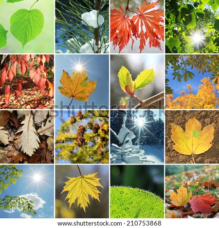 collage - tree leaves and needles in the four seasons - stock photo