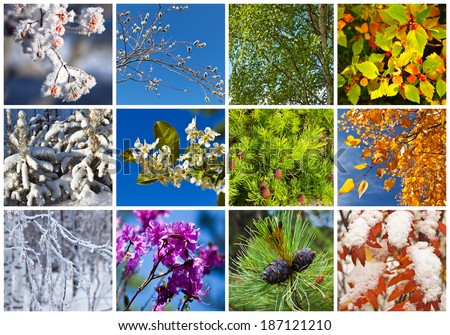 Red Cedar Tree Stock Images Royalty Free Images Amp Vectors