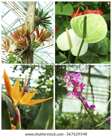 Collage with beautiful flowers in the greenhouse