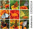collage with butterflies sitting on marigold flower - stock photo