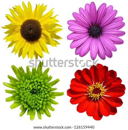 collage with colorful flowers isolated - stock photo