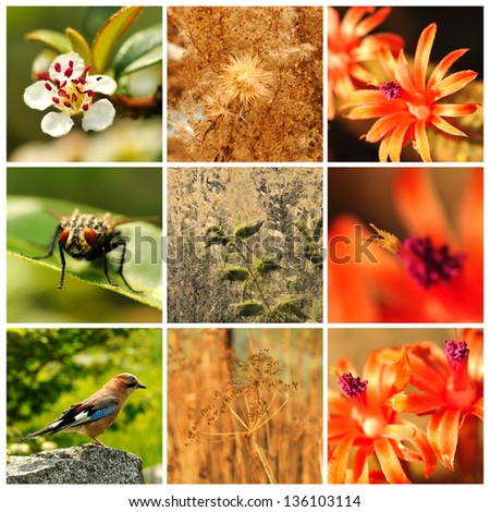 Collage with flowers, bird and fly. - stock photo