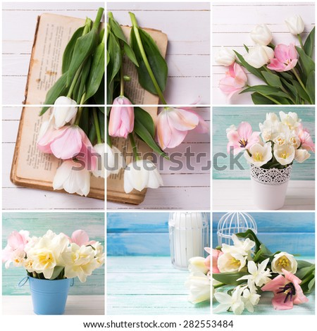 Collage with fresh  spring white and pink  tulips on white  painted wooden background. Selective focus. Place for text.