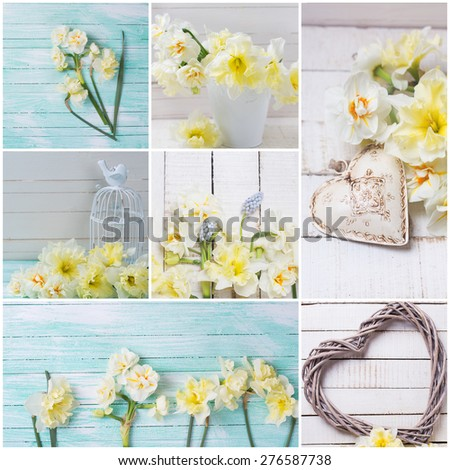 Collage with fresh  spring white and yellow narcissus, hearts  on white  and turquoise painted wooden background. Selective focus.  - stock photo