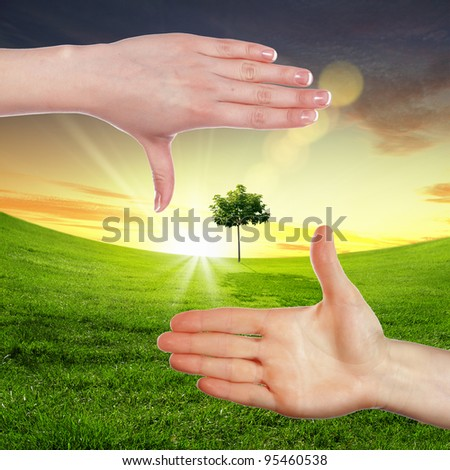 Collage with human hand holding a green plant - stock photo