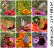 collage with nine kinds of butterflies - stock photo