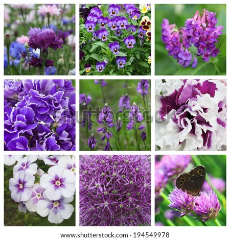 Collage with nine violet flowers - stock photo