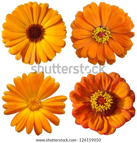 collage with orange flowers - stock photo