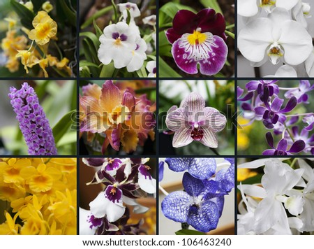Collage with several kinds of orchids