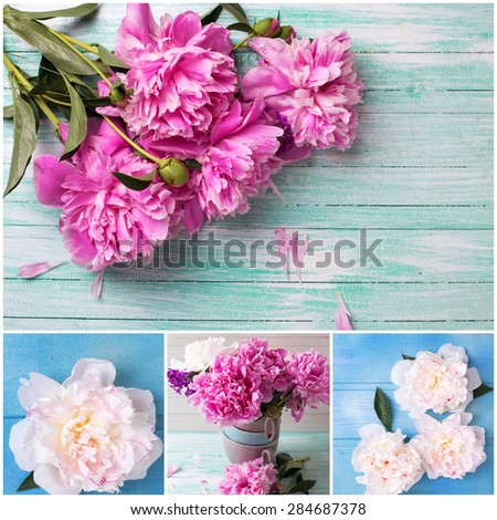 Collage with splendid  pink and white  peonies flowers on bright  painted wooden planks. Selective focus.  - stock photo