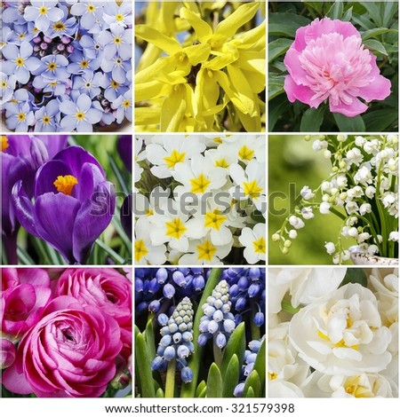 Collage with spring flowers - stock photo
