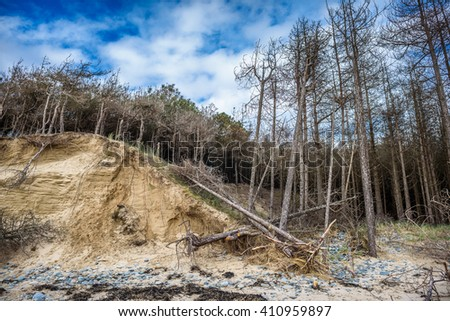 Collapsed conifer trees on sand dunes.