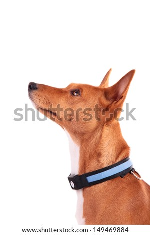 Collar for Dogs - stock photo