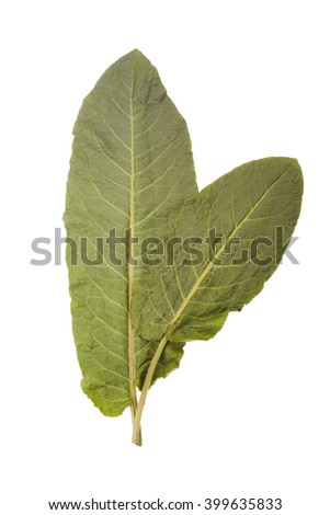 Collard greens leaves isolated on white