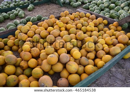 Collected in a pile of melons and watermelons. Rich harvest of watermelons and dyt in a heap at the point of sale directly at the field.