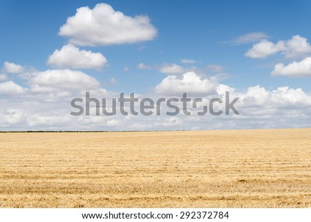 Collected wheat field