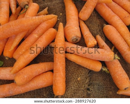 Collecting carrots - stock photo