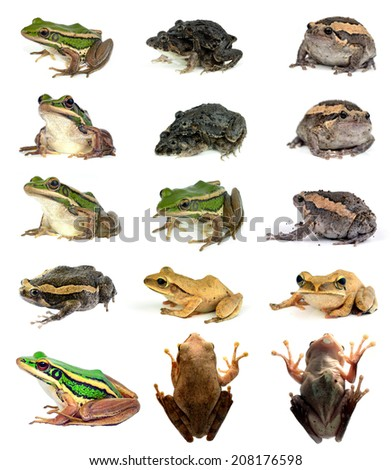 collection animal Frog  isolated on white background - stock photo