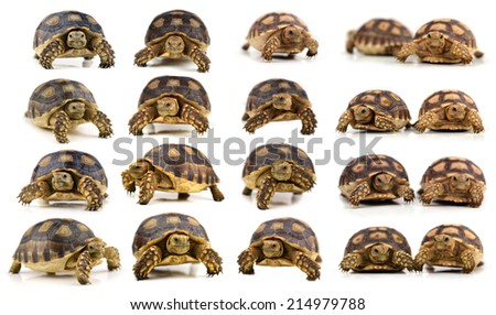 collection animal turtle isolated on white background - stock photo